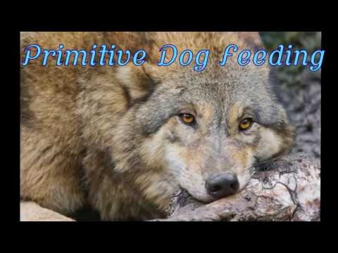 Primitive Dog Feeding - Raw Feed Doberman Eating Lamb