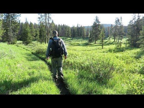 June 9 - Greater Yellowstone - Hiking the Albino Lake area