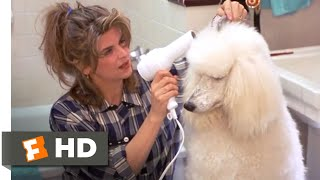 Look Who's Talking Now (1993) - Pet Problems Scene (5/10)   Movieclips