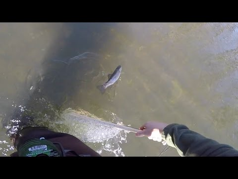 A Good Day Fly Fishing The Elk River, TN