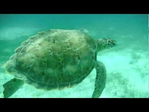 Snorkeling Grenadines et Caraïbe
