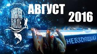 Рыбалка в Волгограде.  На Воде.  Август. Ловля щуки