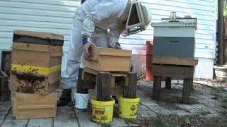 Adding a super to Warre hive