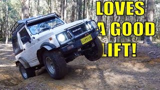 THE ZOOK, 60, PRADO & HILUX GO WHEELING IN WATAGINS FOREST! 2/2