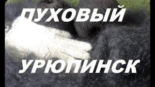 УРЮПИНСК ПОЕЗДКА на ПУХОВЫЙ РЫНОК  Загадка   Урюпинского  пухового  рынка