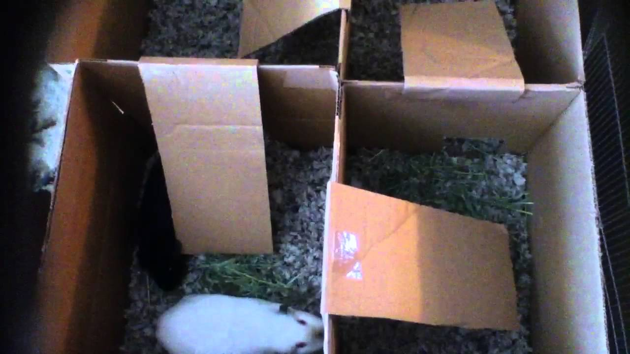 Homemade playpen for guinea pigs youtube for Diy playpen for guinea pigs
