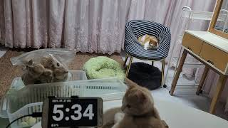 [고양이] 그리고 마늘까기 #16