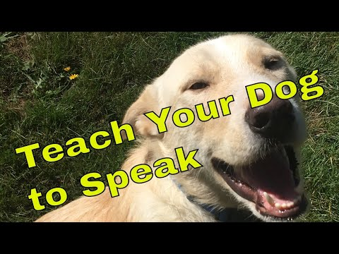 How to Teach Your Dog to Speak on Command