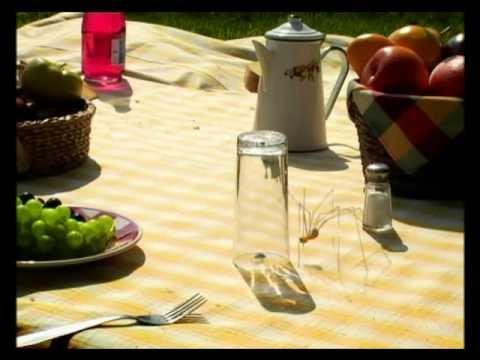 youtube filmek - Csodabogarak - Piknik (2.évad 3.rész)