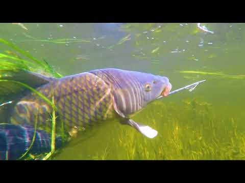 Подводная Охота 2018. Охота на Крупного Сазана Нижняя Волга