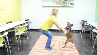 Dog can jump rope