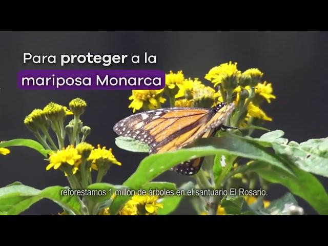 Celebra la vida en nuestros bosques - Gobierno de Michoacán
