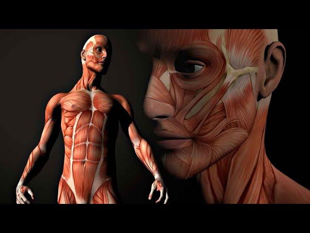 Grivera Anatomista - YouTube Gaming