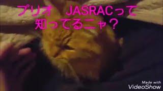 甘ったれ猫と毎日まったり生活 thumbnail