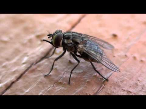 Biting stable flies bug boaters: What are they, and what can you do?