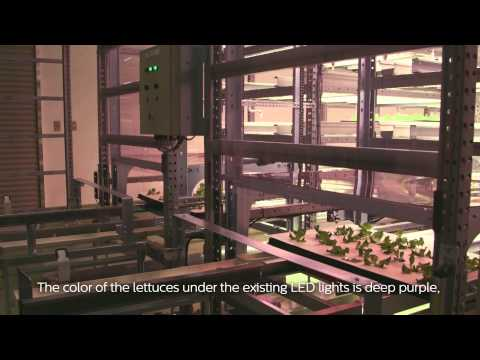 Safe, fresh vegetables - Osaka Prefecture University, Japan (English subtitles)