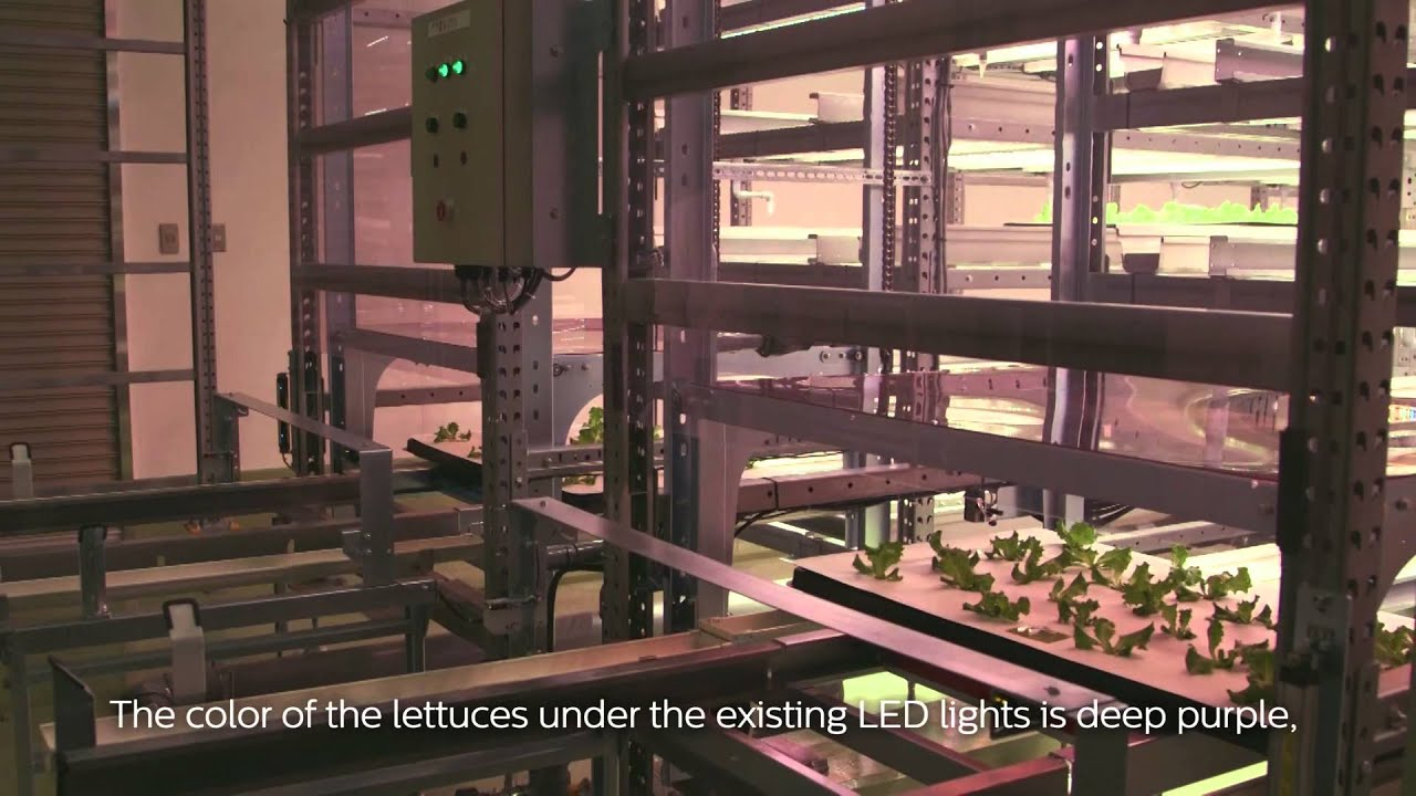 Safe fresh vegetables Osaka Prefecture University Japan English