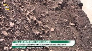 BİTKİ BESLEME - HAM LEONARDITİN ELDE EDİLMESİ