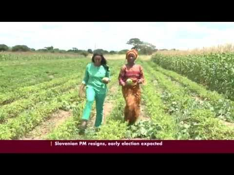 Zambian Farmer turns to Conservation Agriculture