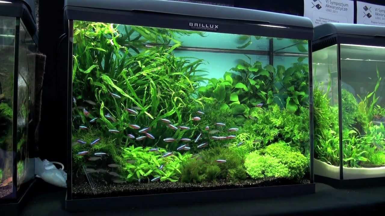 Aquascaping - Aquarium Ideas from PetFair 2011, part 3 - YouTube