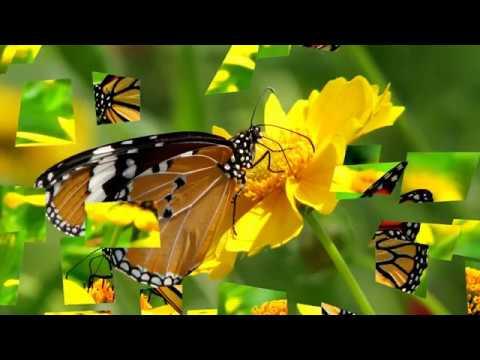 Beautiful Butterflies & Flowers HD1080p
