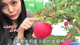 你知道在台灣吃到的美味日本蘋果,絕大多數來自青森,這個蘋果王國細心...