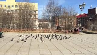 Голуби в сквере 60 летия Магадана