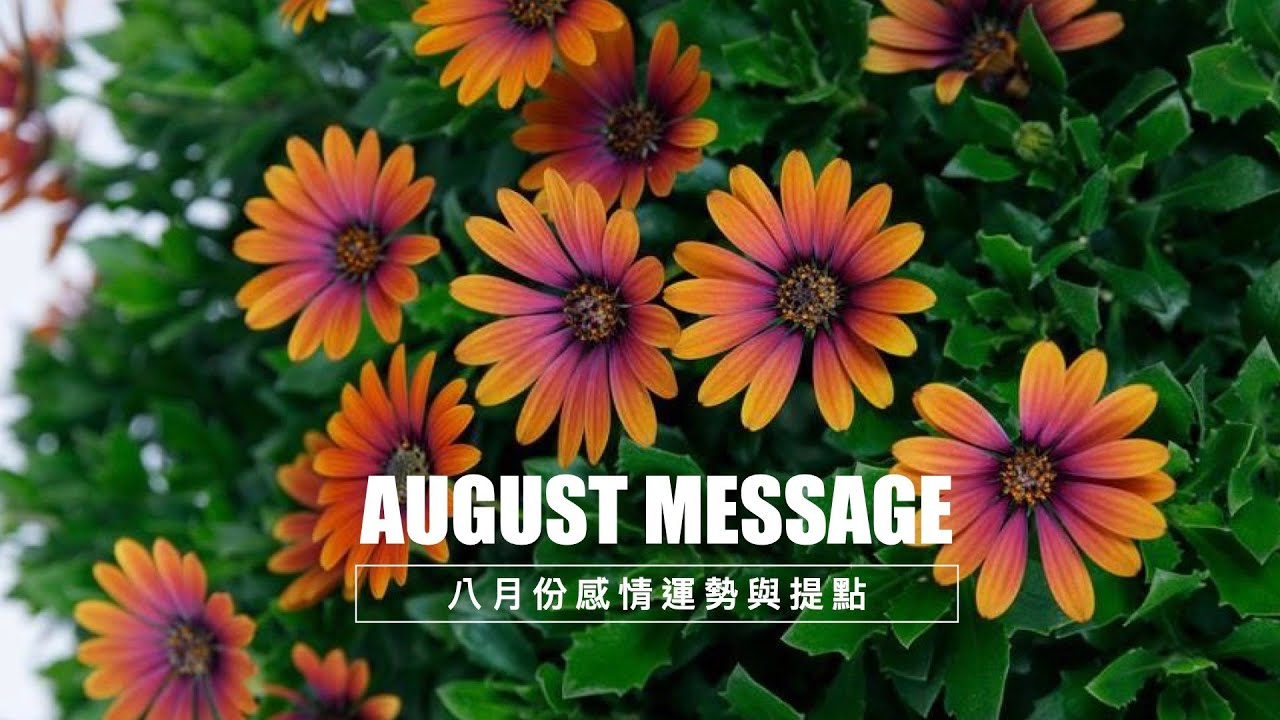 【8月份感情運勢占卜與提點】會有新戀情或者關係進展?前言有大師加持提點