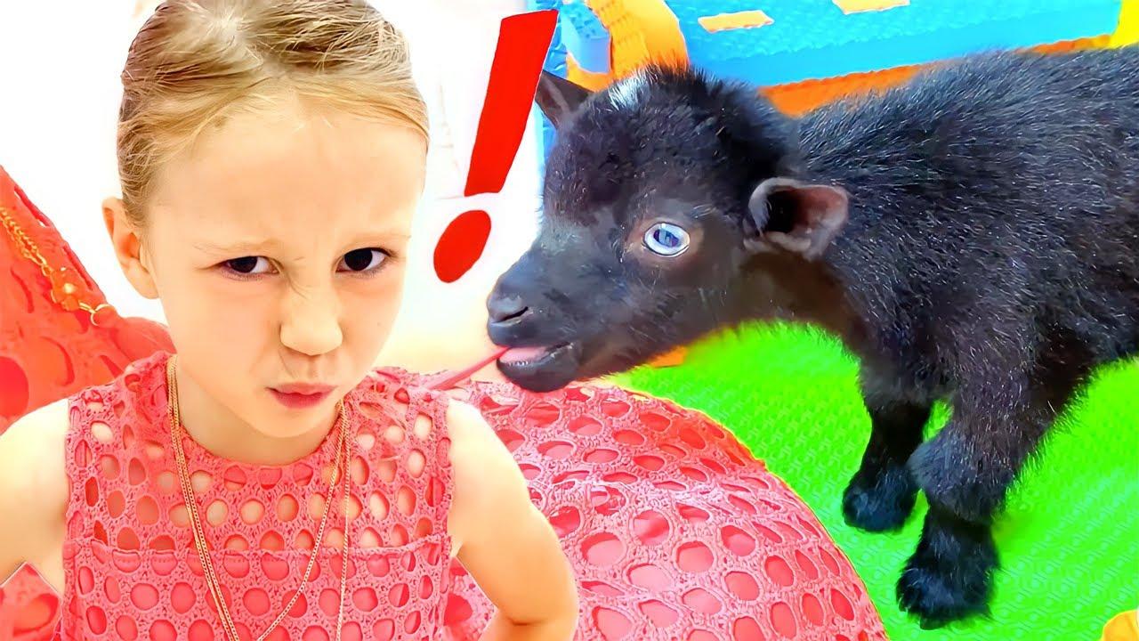 ناستيا وأبي، قصة اختيار حيوانات أليفة جديدة
