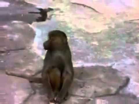 Funny Monkey-monyet Kaget Melihat Wajahnya