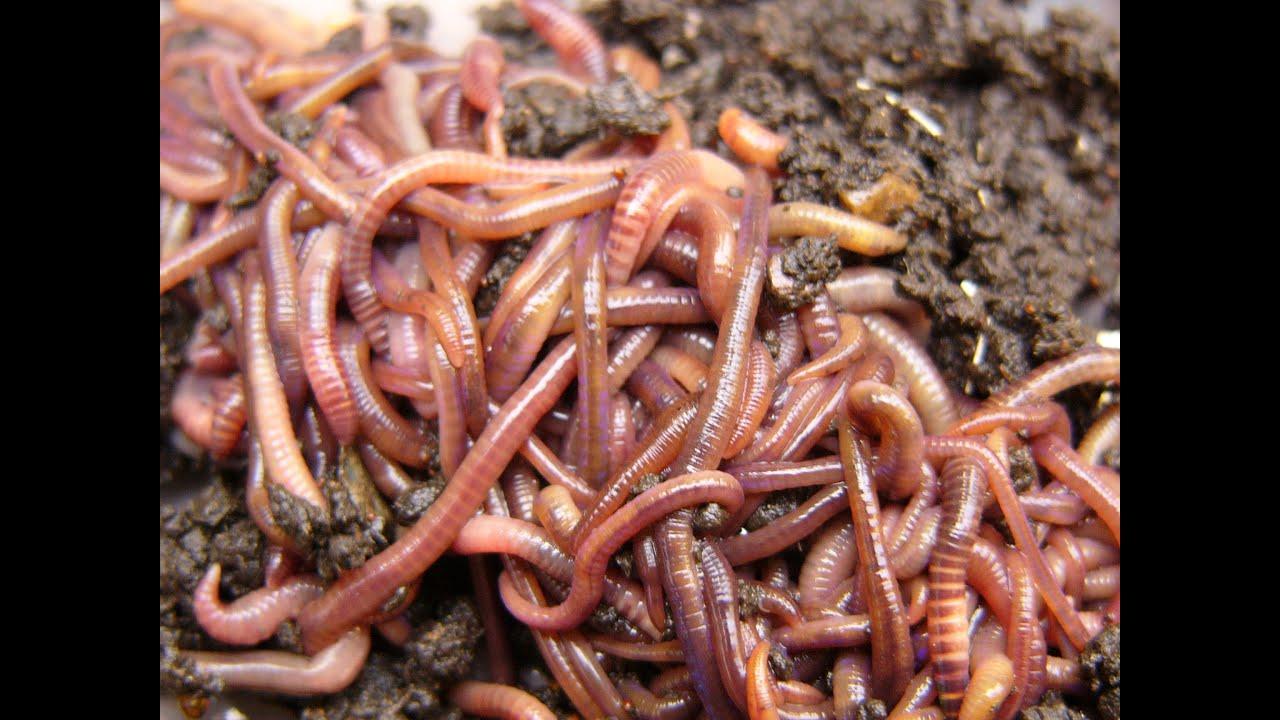 Terraria fast worm farming youtube for Terraria fishing bait