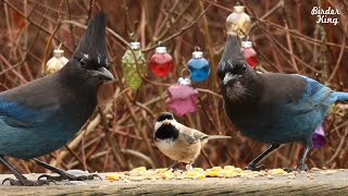 CAT TV 6 Hours: Christmas Party With Beautiful Birds And Squirrels.