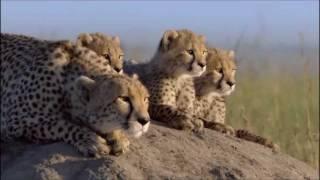 Vega4 - Life Is Beautiful (African Cats Music)