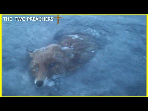 -57°c (-71°F) Siberia   -51°c Kazakhstan Animals frozen SOLID