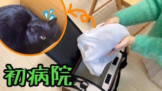 【性別判明】保護した野良猫を手術前健康チェックへ連れて行きます