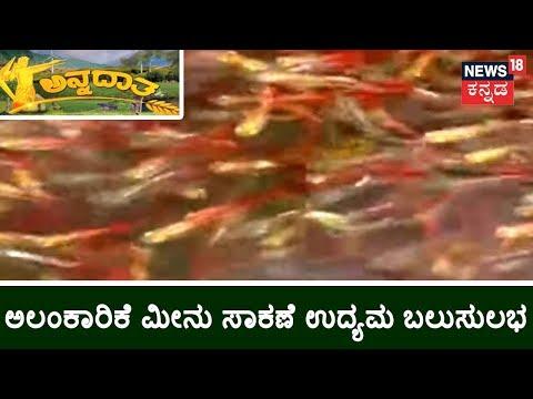 Ornamental Fish Farming- How To Start?