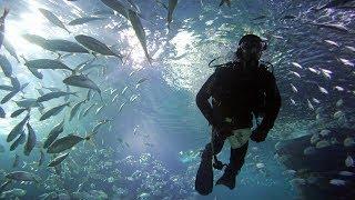 Швейцарский пресноводный аквариум станет крупнейшим в Европе (новости)