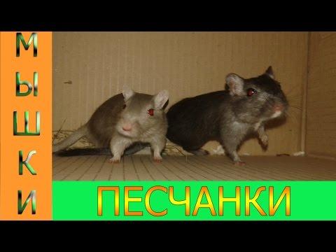 Смешные мыши - одной повезло, другая удивилась...