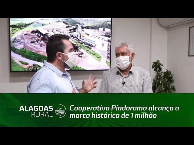 Cooperativa Pindorama alcança a marca histórica de 1 milhão de toneladas de cana processadas