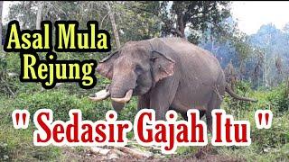 Download Lagu Asal Mula Rejung Sedasir Gajah Itu mp3