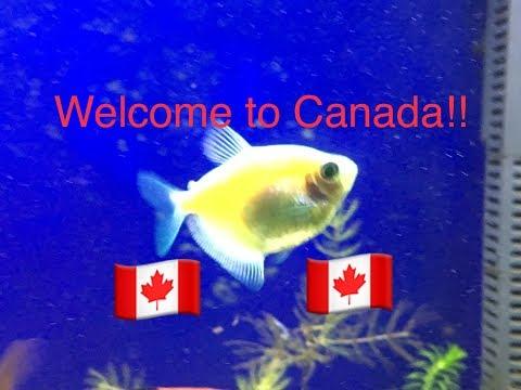 GLOFISH New To Canada