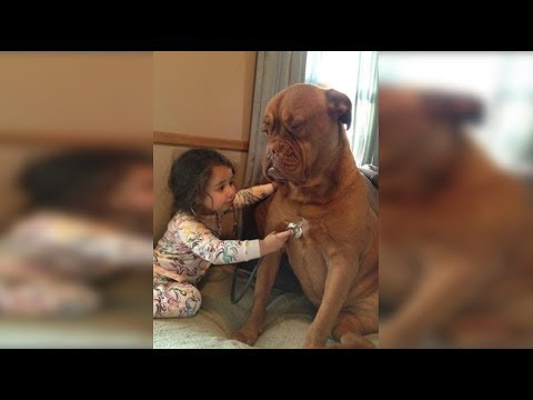 Cute Babies Doctor Take Care Dogs So Sweet - Funny Dog and Baby Compilation