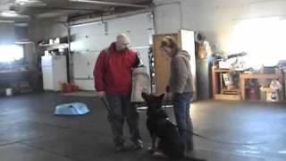 "Schutzhund Protection Training....GSD ""Chico""....Feb 13th 2011"