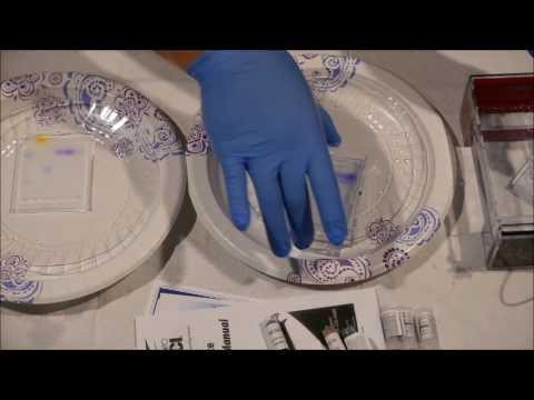 DNA Fragment Length: #3 DNA Staining
