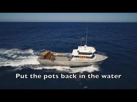How To Catch Western Rock Lobster