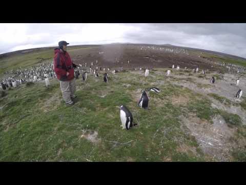 Antarctica and Cape Horn