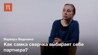 Акустическая коммуникация сверчков-Варвара Веденина