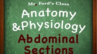 Introduction To Anatomy Physiology : Abdominal Sections