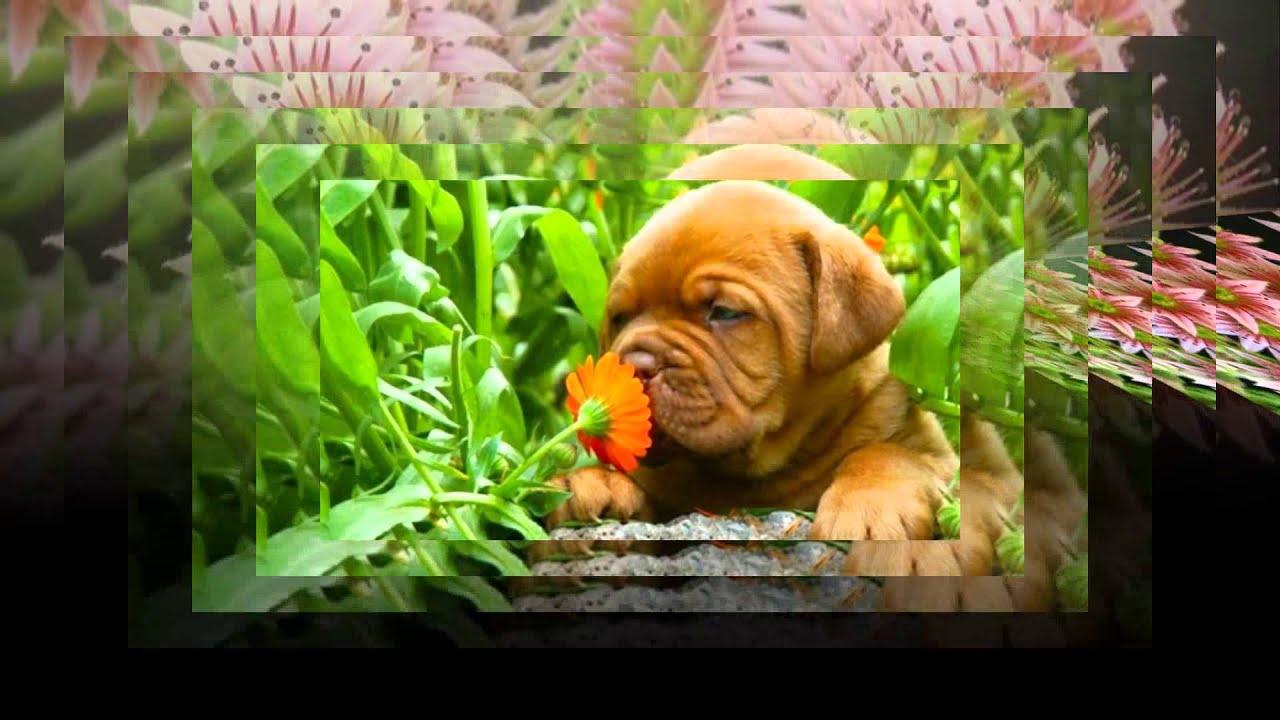 Цветок фикус для чего он нужен