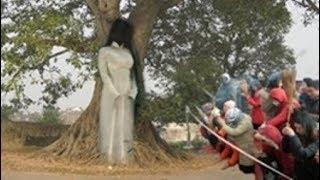 Quảng Ninh: Cây thị bị m/a ngự trị không ai có thể chạm đến